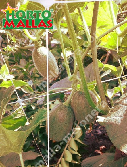malla tutora de melones